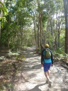 Gum trees on a bushwalk