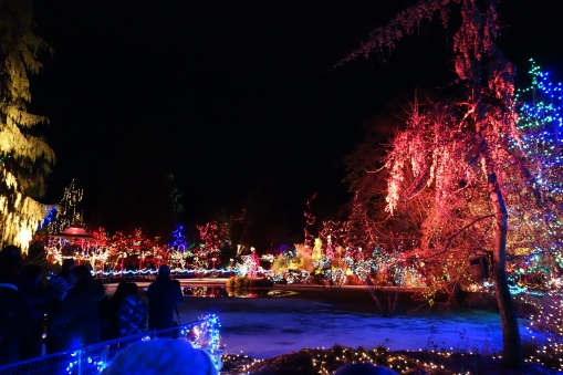 Christmas lights at the gardens!