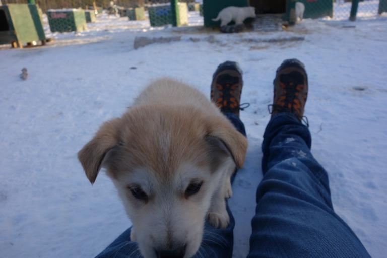 Puppy cam