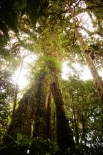 Beautiful Monteverde, Costa Rica