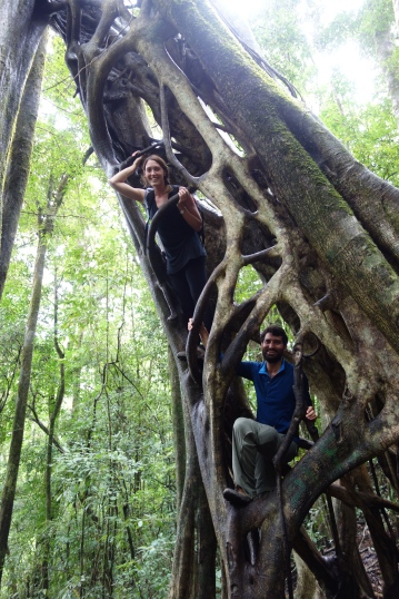 Monteverde's hollow tree