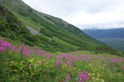 Hiking through meadows to Harding Icefield Trail